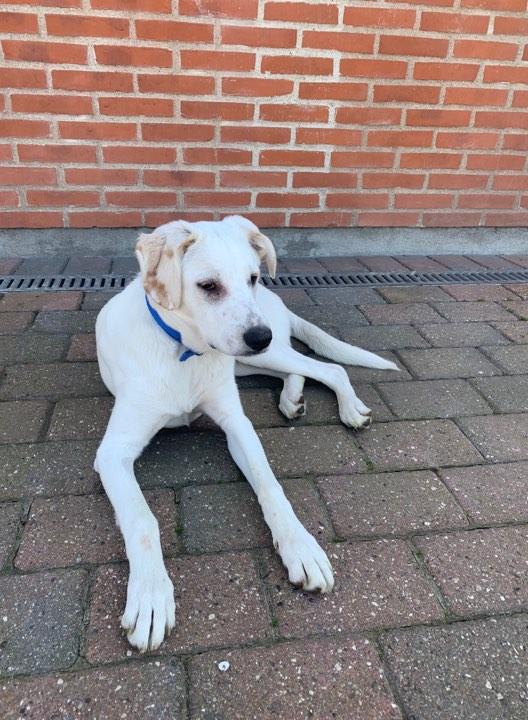 hunde adoption jylland